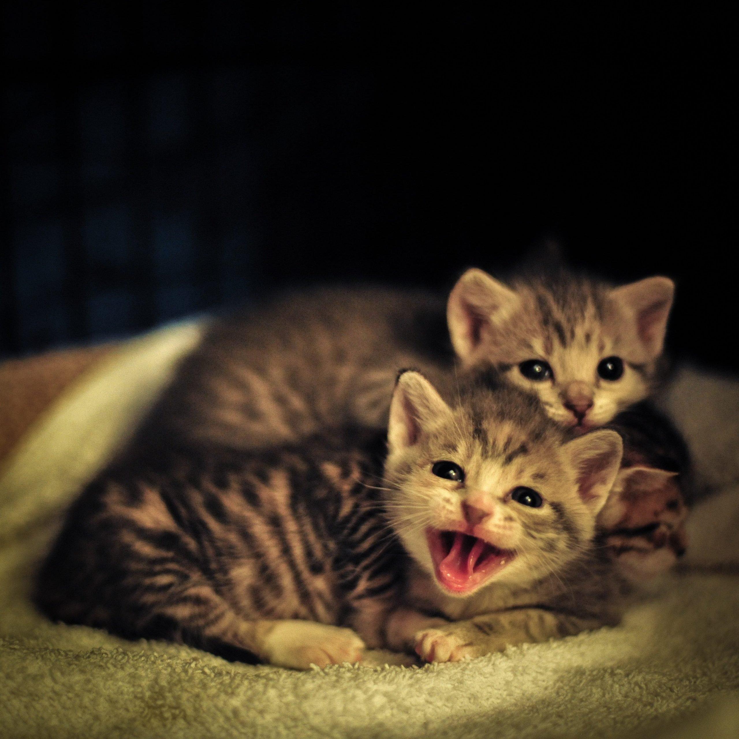 Kitten tanpa induk - Photo by Zetong Li on Unsplash