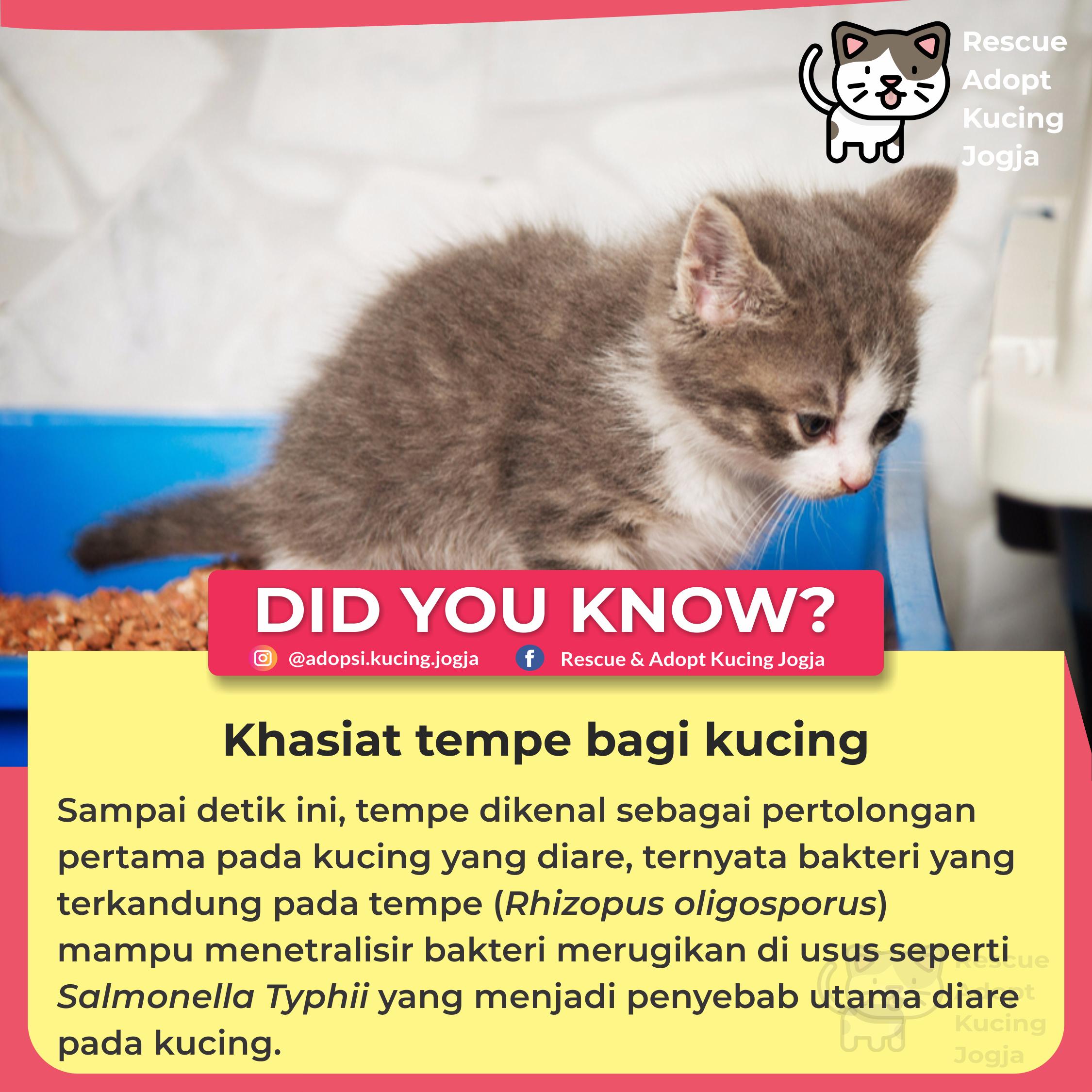 Khasiat Tempe Bagi Kucing Cat Rescue