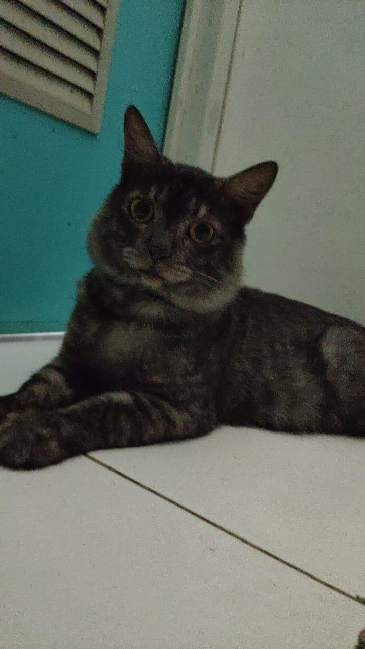 TNR Kucing Depok - Baba