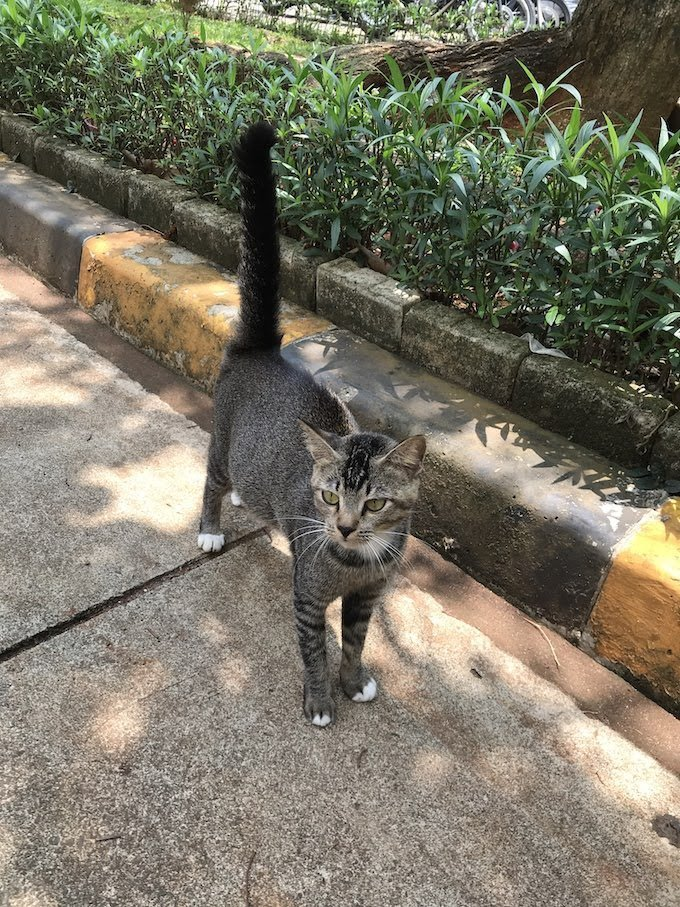 Cat Rescue Grey