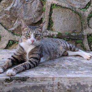 Cat Rescue Jutek