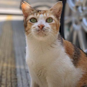 Cat Rescue Mak Telon
