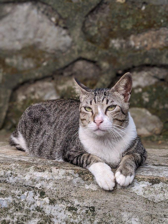 Cat Rescue Toce