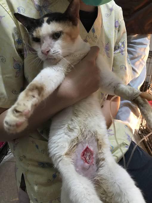 Shinta dengan lukanya