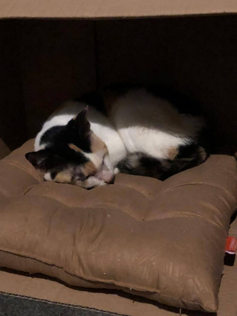 Shinta tidur di rumah foster