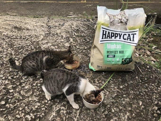 Cat Rescue Ps Minggu 2Cat Rescue Mimi