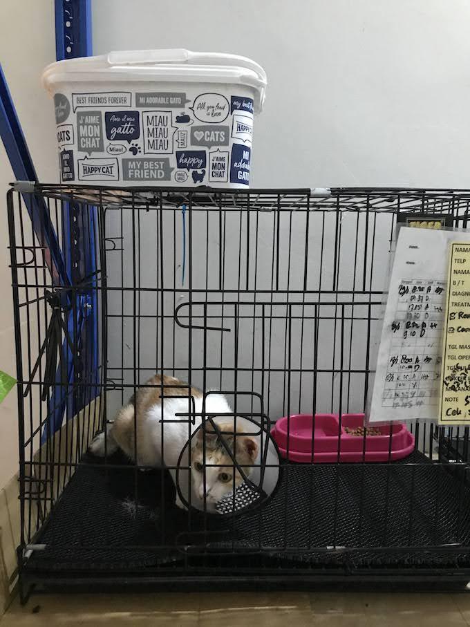 Cat Rescue Mimi