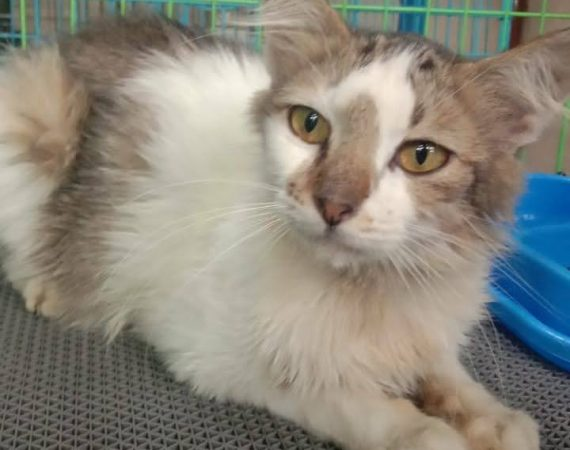Cat Rescue Beri