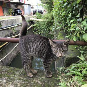 Cat Rescue Kitten Tupi
