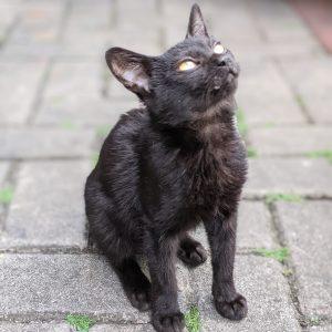Cat Rescue Bella