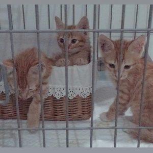 Cat Rescue Trio Oyen