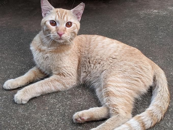 Cat Rescue Kalo