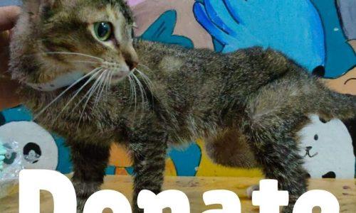 Donate - Triki Cat Rescue